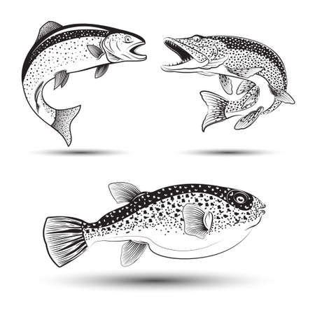 Set of fishes isolated
