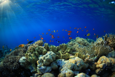 beautiful coral reef and much sea fish photo