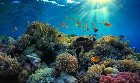 red coral colony: beautiful view of sea life  Stock Photo