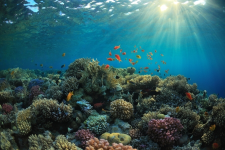 reef fish: beautiful coral reef and mach fish
