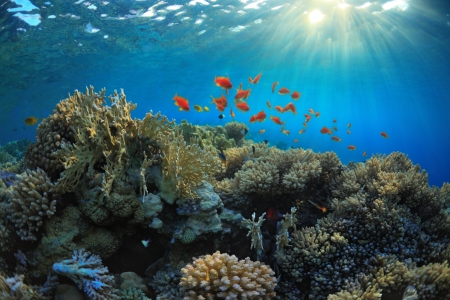 mach: beautiful coral reef and mach fish