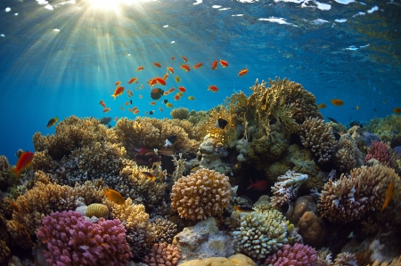 beautiful coral reef and mach fish photo