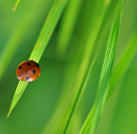 ladybug on Travin photo
