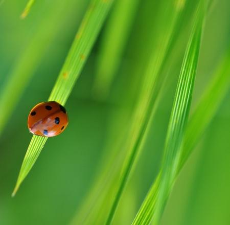 ladybug on Travin photo