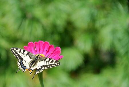 butterfly on a flower on a green background photo
