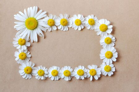frame with daisies photo