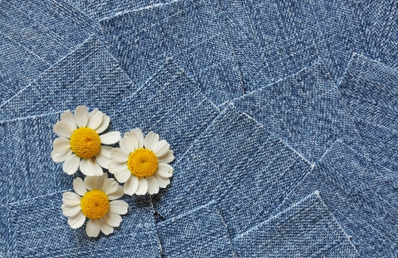 camomiles on denim background photo