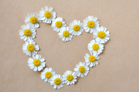 Chamomile, heart photo