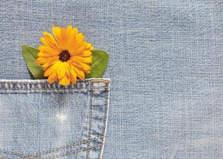 marigold flower on denim background photo