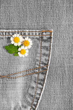 camomiles, jeans photo
