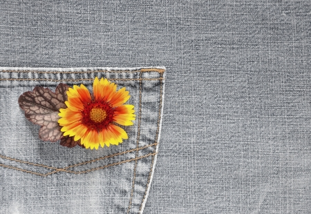 Flower, jeans photo