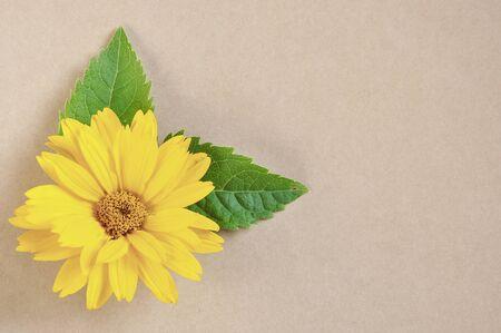 yellow daisy  photo