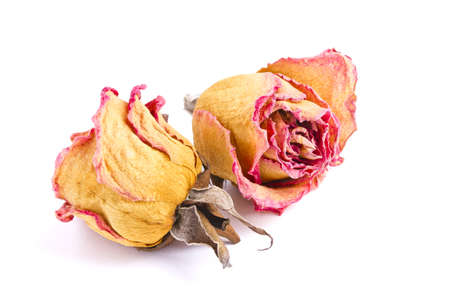 two dried red roses, without stems photo