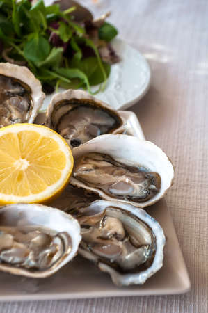 fresh French appetizer oysters on ice with lemon, for gourmets photo