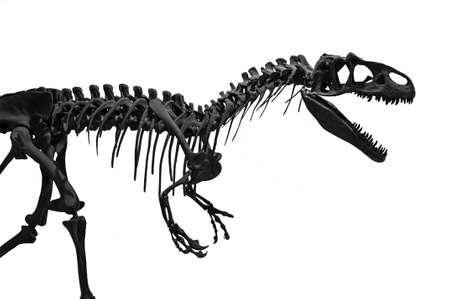 Silhouette of the skeleton of a predatory Tyrannosaurus Rex t-Rex on a white background.