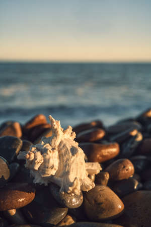 a white shell on the background of the sea