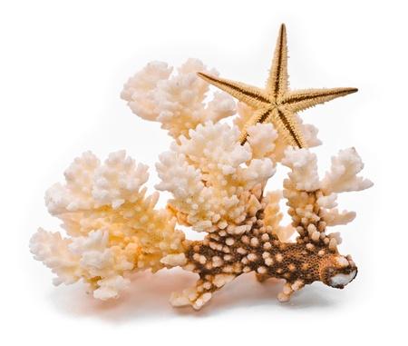 corales marinos: Coral blanco y estrellas de mar. Aislado en fondo blanco
