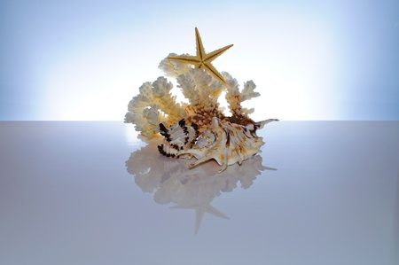 marine coral: Marine coral and shells. Reflected on the table