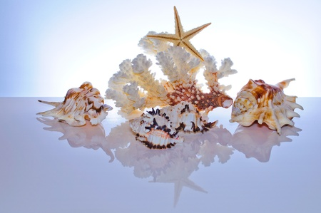 Marine coral and shells. Reflected on the table