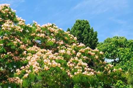 Green flowering trees on blue sky background