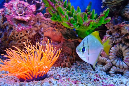 Marine tropical fish. Colorful exotic little fish Stock Photo - 10281676