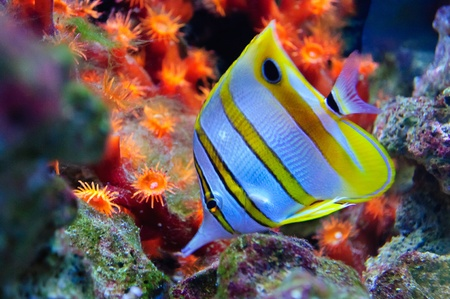 colorful fishes: Marine tropical fish. Colorful exotic little fish
