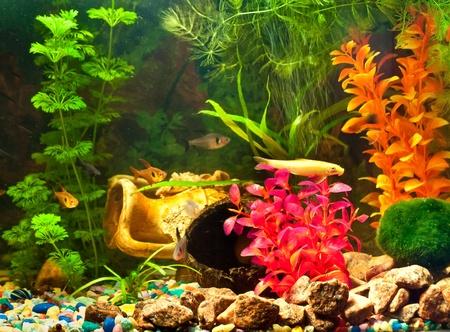 Aquarium with plants and fish Archivio Fotografico