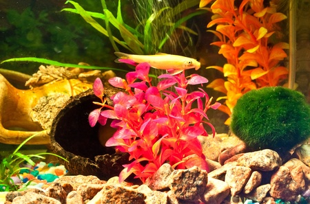 Aquarium with plants and fish Stock Photo - 12044317