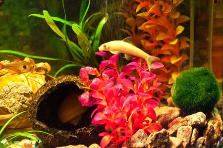 biotype: Aquarium with plants and fish Stock Photo