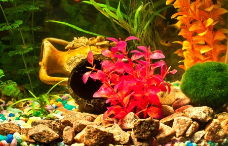Aquarium with plants and fish Stock Photo - 12044319