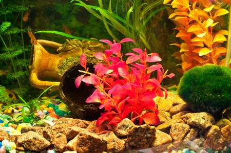 Aquarium with plants and fish Stock Photo - 12044316