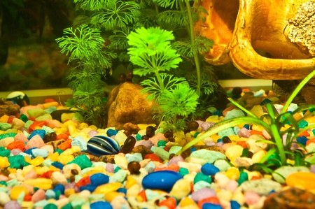 Aquarium with plants and fish photo