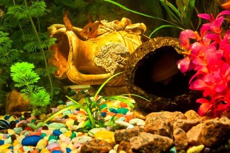 biotype: Aquarium with plants and fish Stock Photo