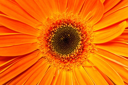 Floral bouquet. Photo gerbera isolated on white background photo