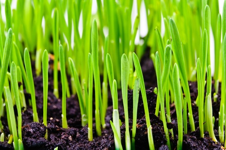 Germinated plants  Close-up Photos
