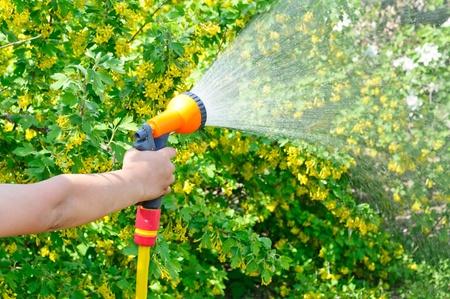 Regar el jardín con una manguera con un spray