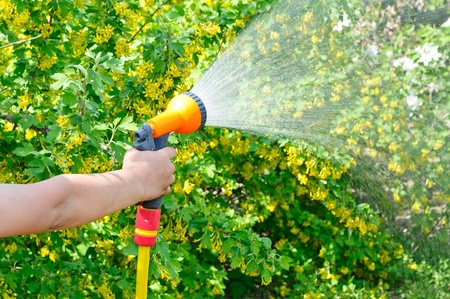 hosepipe: Watering the garden with a hose with a spray