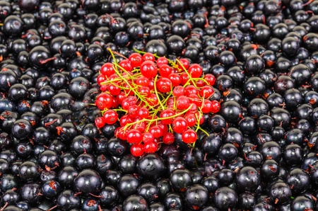 Background of the berries black and red currants. Photo Close-up photo