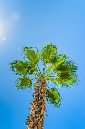 Palm against the blue sky. Photo Close-up photo