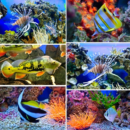 turkeyfish: Marine tropical fish. Colorful exotic little fish