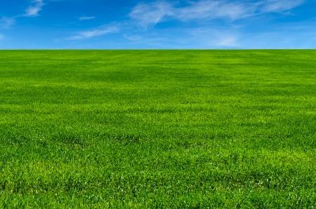 Green grass on the field  microstock photo Standard-Bild