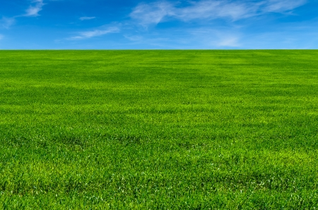 Green grass on the field  microstock photo Stock Photo