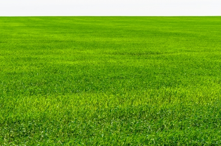 Green grass on the field. microstock photo photo