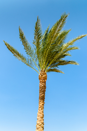 Palm tree against the blue sky. Stock Photo photo