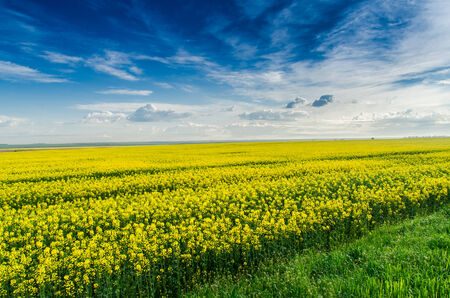 Clouds over a yellow field  Photo for microstock photo