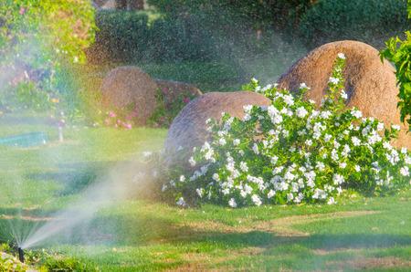 정원에서 자동 뿌려 식물. 마이크로 스톡에 대한 사진 스톡 콘텐츠