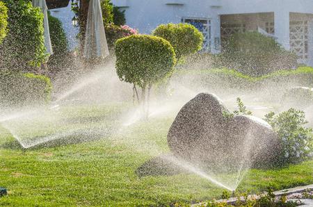 Plantes Saupoudrer automatiques dans le jardin. Photo de microstock Banque d'images