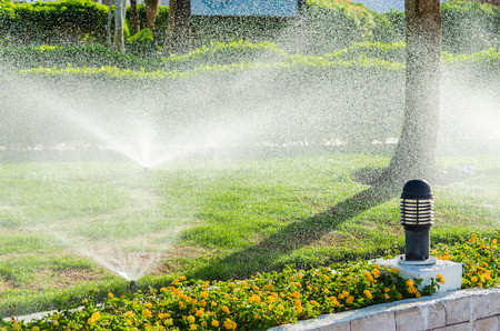 자동 정원에 식물을 뿌리십시오. 마이크로 스톡을위한 사진 스톡 콘텐츠