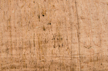 The texture of the papyrus. Macro photo for microstock