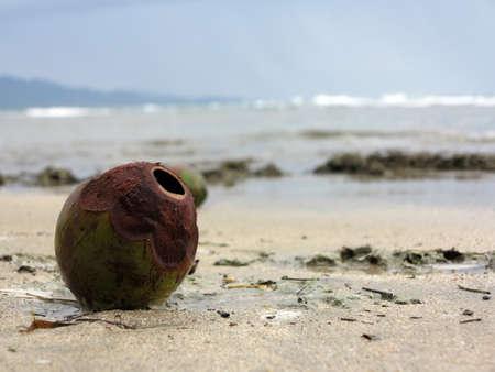 Coco sunbathing on the beach in Manzanillo - COSTA Rica